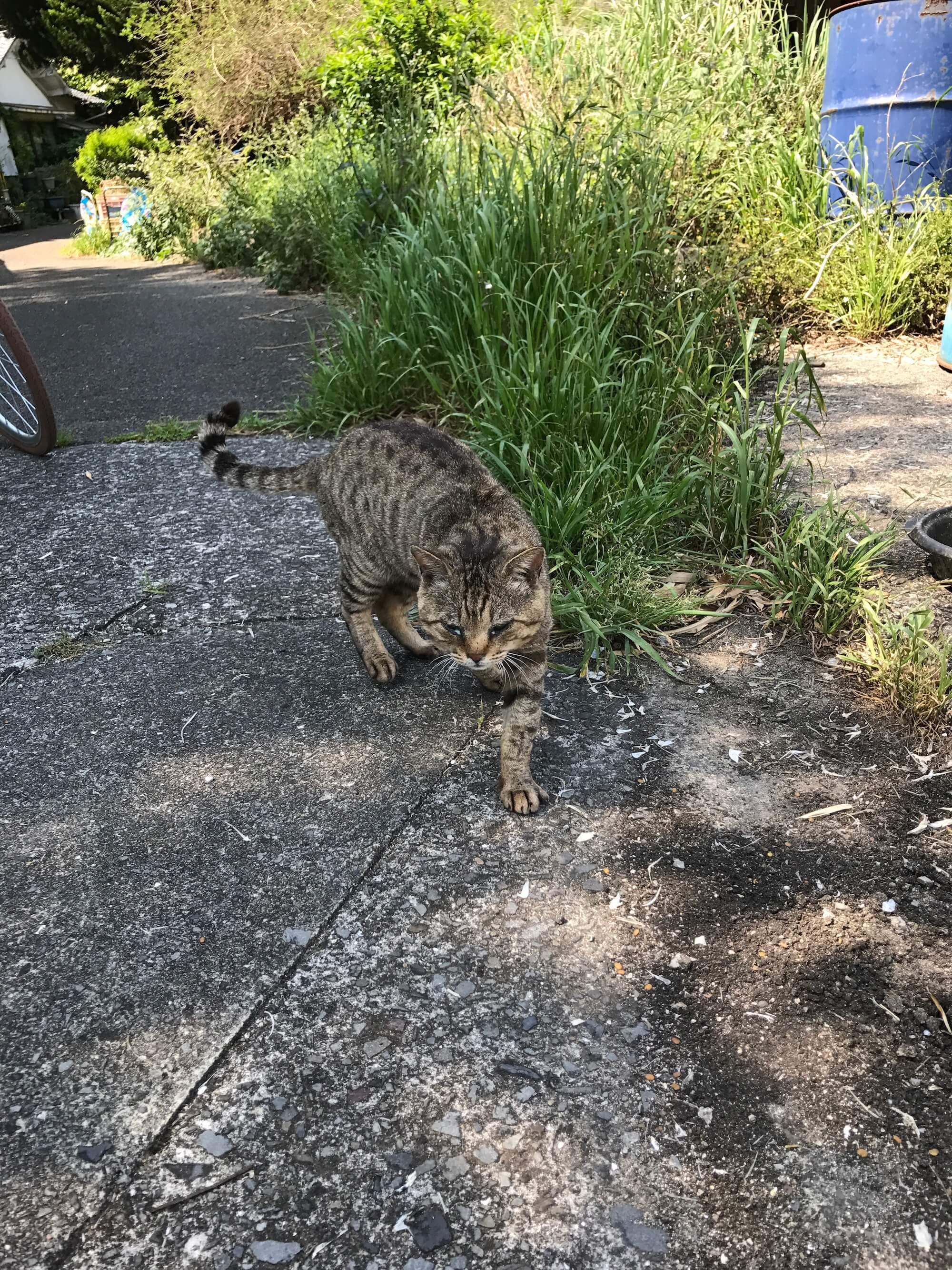 興居島の猫