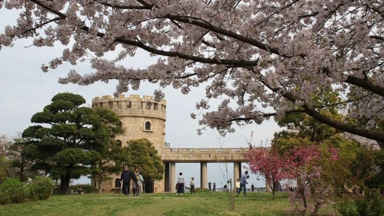 【松山お花見スポットその1】松山総合公園に行ってきました