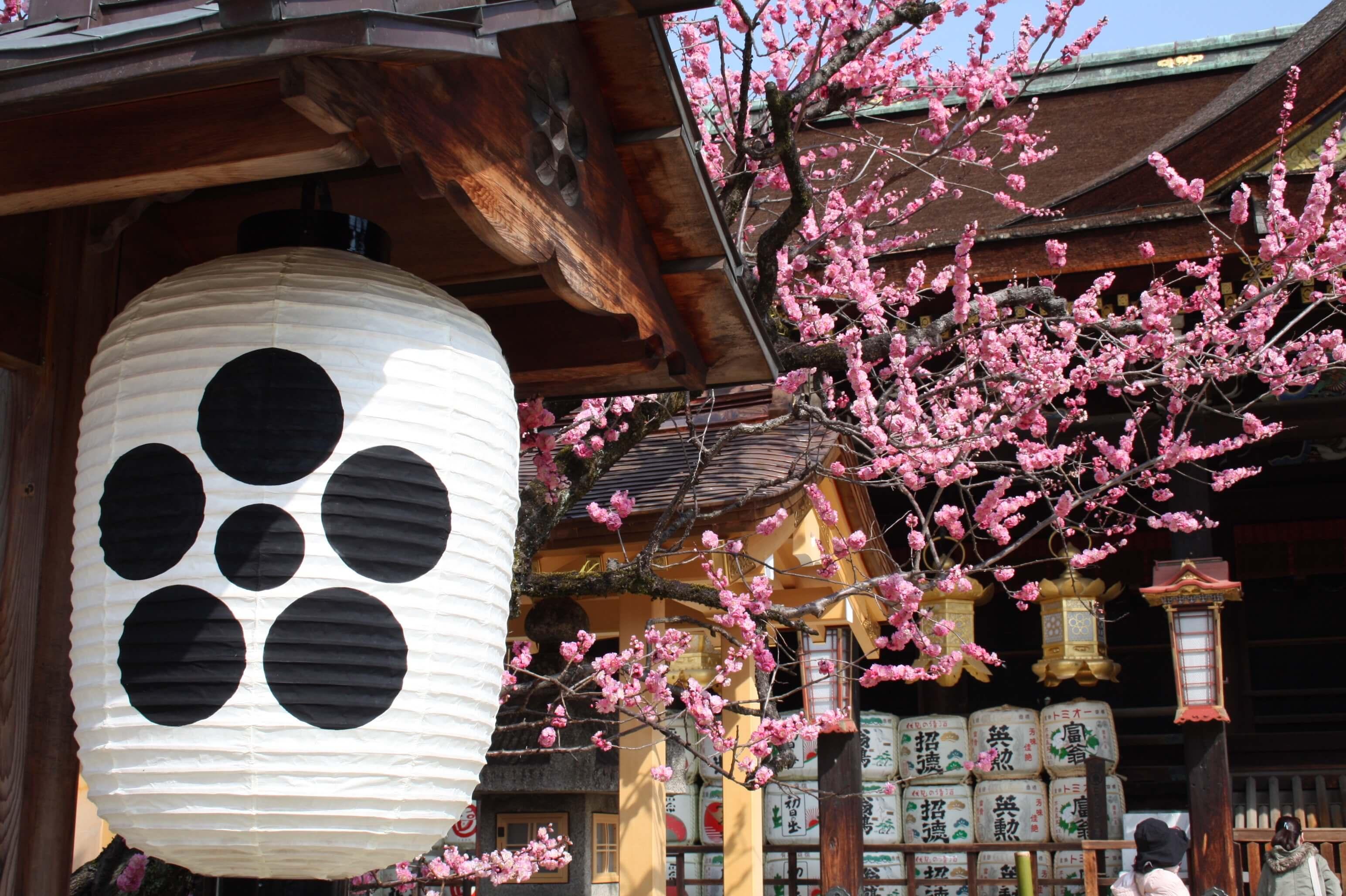 【お花見におすすめ】京都の花街「上七軒」