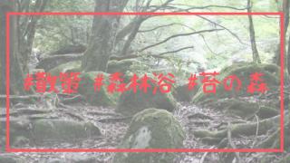#散策 #森林浴 #苔の森