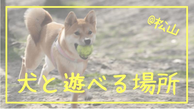 犬と遊べる場所 @松山
